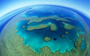 Reefwalk 2013: Great Barrier Reef