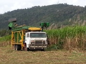 Reefwalk 2013: Harvesting sugarcane. We all need to eat.