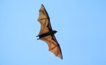 Reefwalk 2013: Flying fox